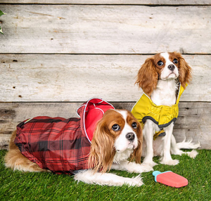GF Pet - Reversible Rain Jacket