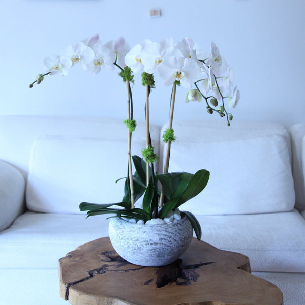 Triple White Orchids - same day best orchids flower delivery Manhattan Midtown NYC New York 10019 10022 - buy send orchids - corporate flowers