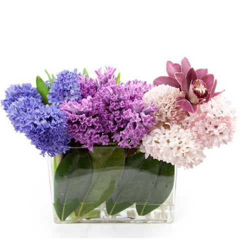 Same day delivery 10022 - Floral Arrangement - Hyacinths