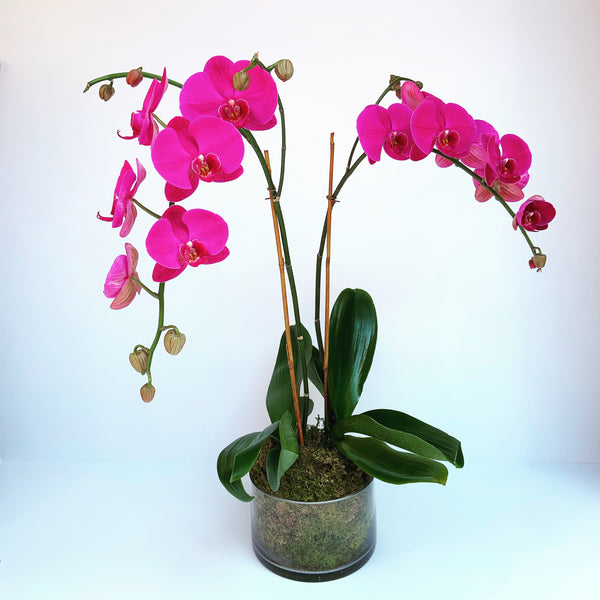 send orchids flowers new york - flower deivery nyc - Manhattan florist