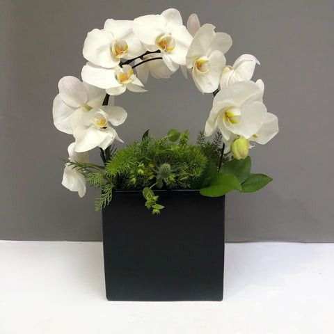 orchid flowers same day flower delivery nyc buy online corporate flowers manhattan 10023 10022 10019 midtown florist