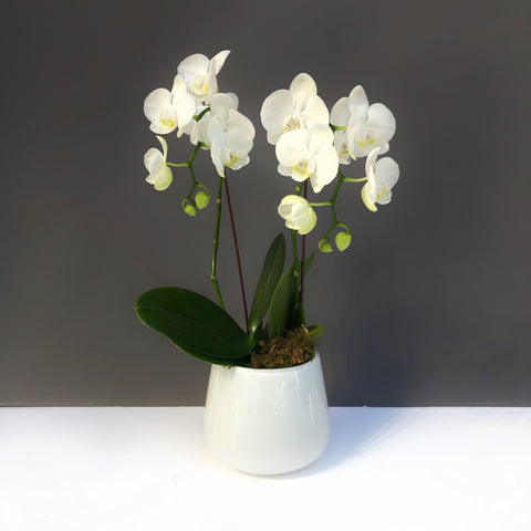 orchids nyc same day flower delivery manhattan