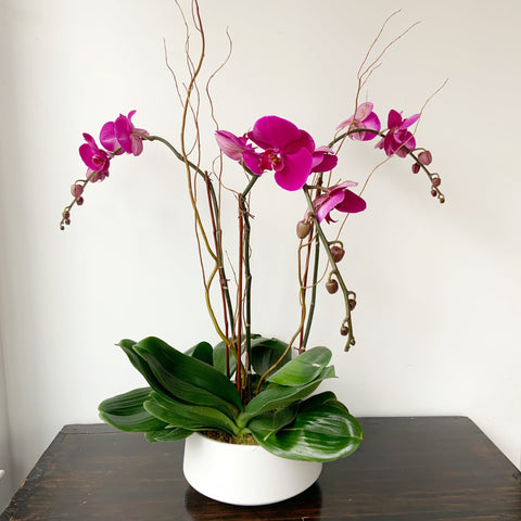 Triple Purple Orchid