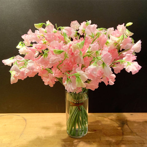 sweet peas flower delivery nyc