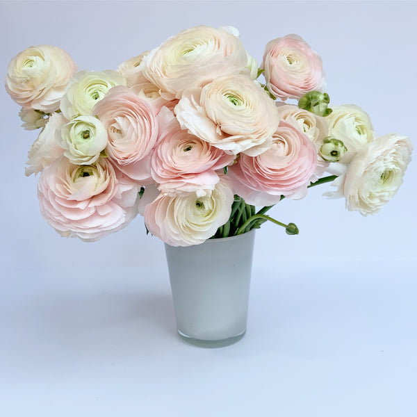 ranunculus - send flowers buy orchids new york - flower delivery nyc
