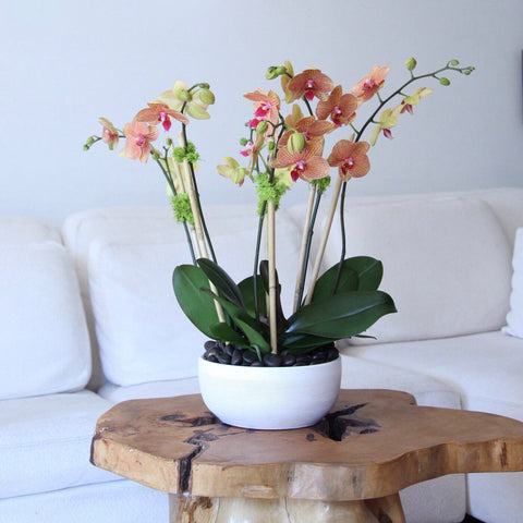 send orchids new york - buy orchids nyc - flower delivery nyc - manhattan florist 10019