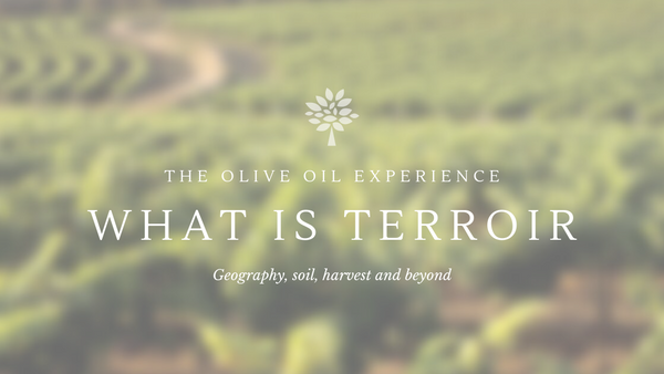 What is therroir. The Identity of Extra Virgin Olive Oil