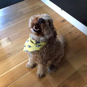 Fox Easter Dog Bandana Yellow