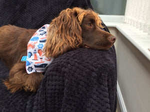 Seaside Dog Bandana