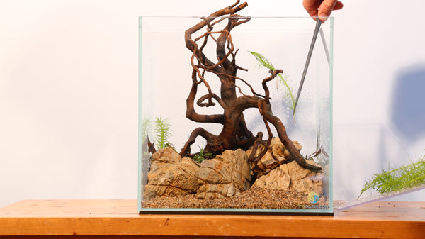 PART 3: How to Aquascape - Planting