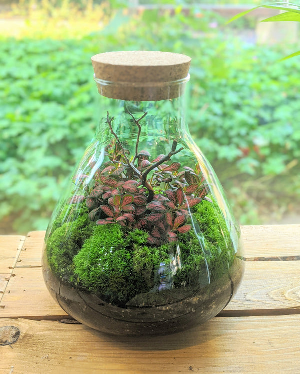 Large Planted Flask Terrarium (store collection only)