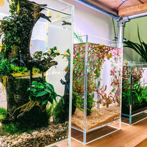 DOOA Neo Glass Air (+ 2 Free Tropica 1-2 Grow Pots)