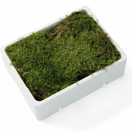 Flat/carpet moss, 1/4 tray (1 sheet)