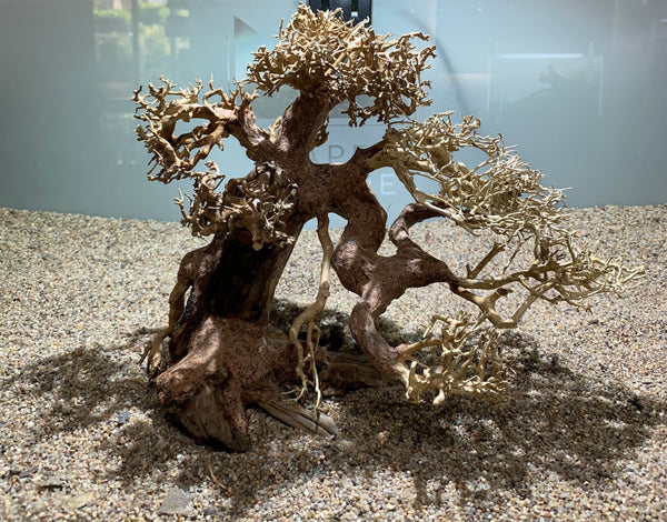 Bonsai tree driftwood