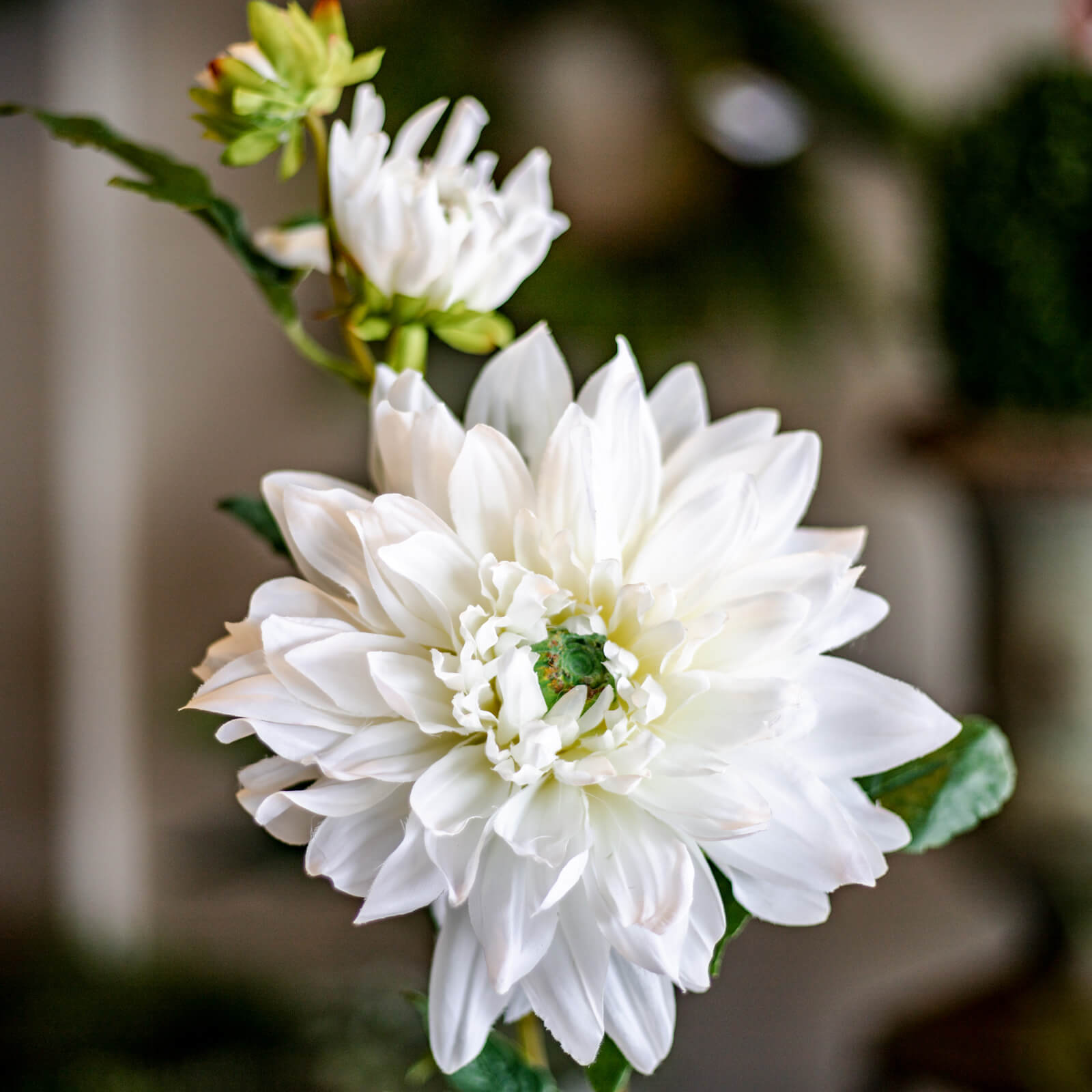 "A gorgeous faux white Dahlia bloom with two small buds, standing 25-1/2"" tall. The details are beautiful and life-like! Find it in Topeka, Kansas at Red Door Home Store."
