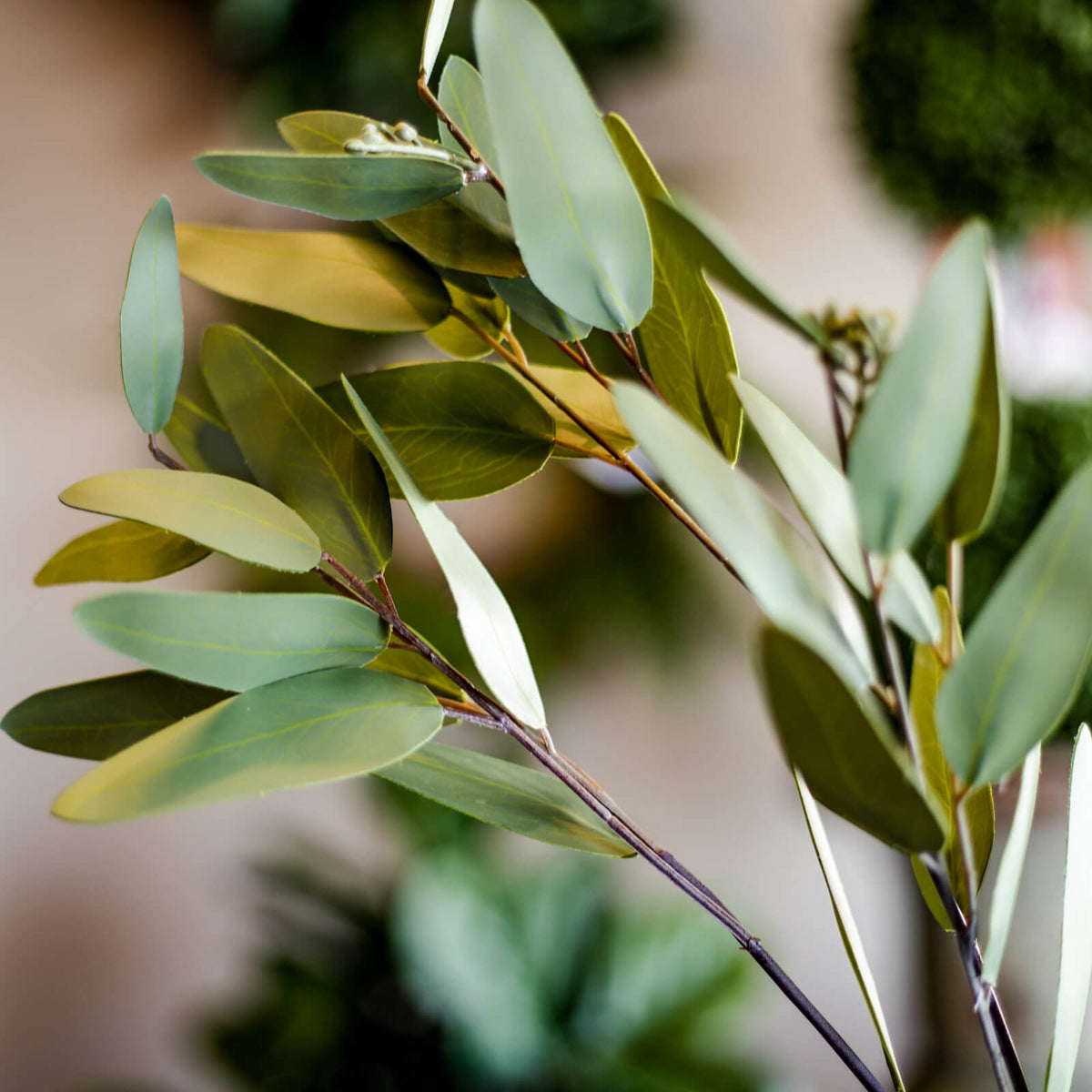 The soft green hues in a closeup shot of a realistic faux Eucalyptus leaf spray in a vase on a tabletop in Topeka, Kansas.