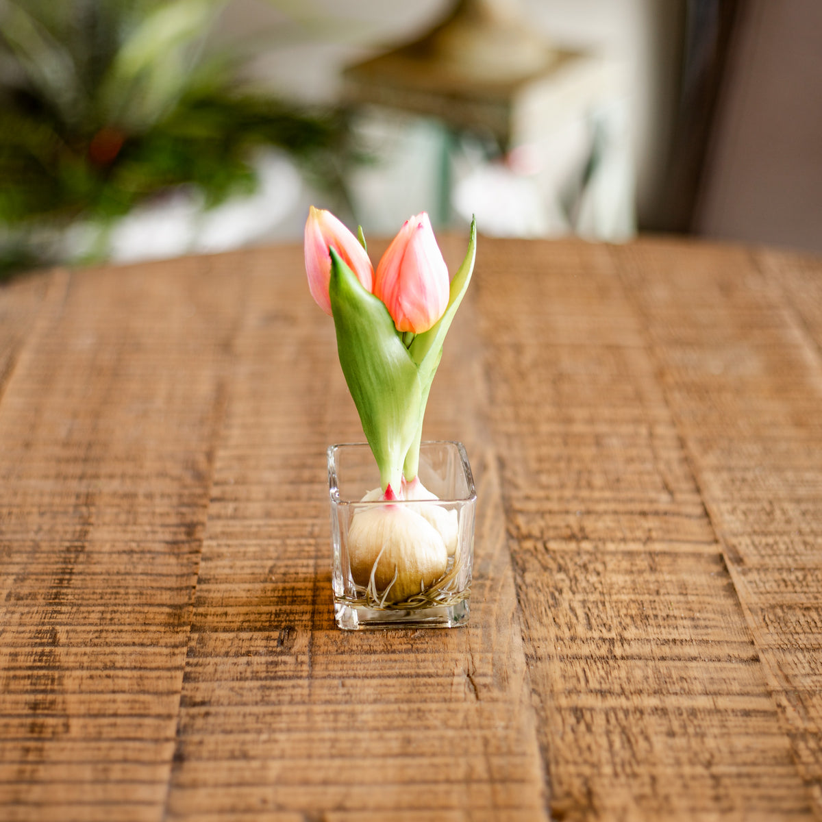 "7.5"" Tulip In Glass Vase"