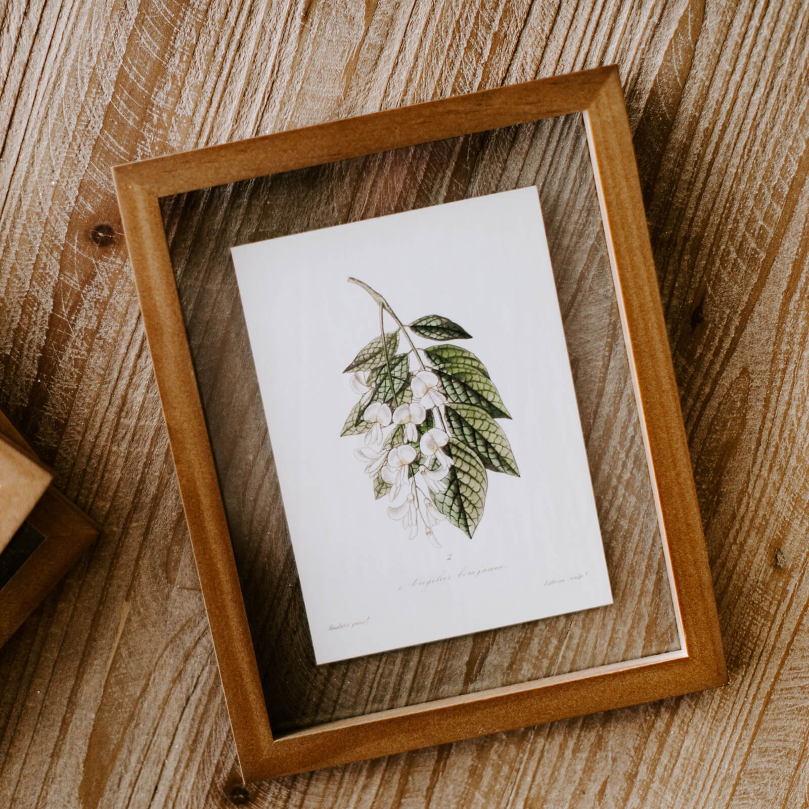 A framed botanical illustration of small white flowers and green leaves inside a wooden frame resting on a tabletop