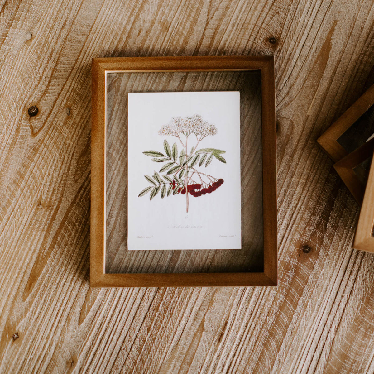 A framed botanical illustration of small white flowers, red berries and green leaves inside a wooden frame resting on a tabletop