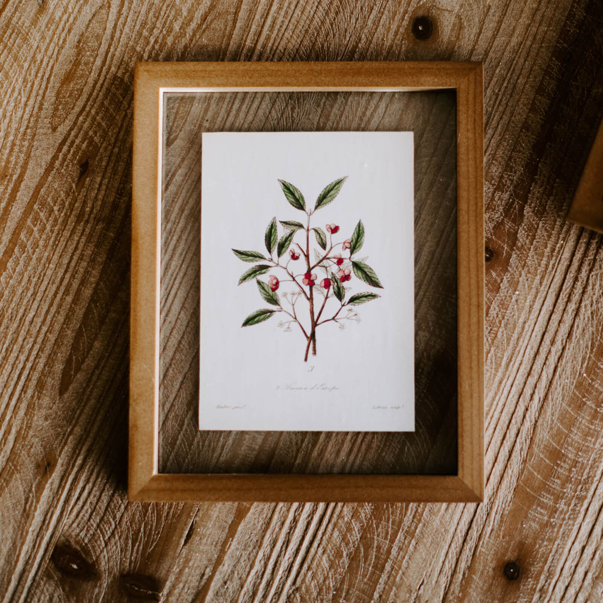 A framed botanical illustration of small red flowers and green leaves inside a wooden frame resting on a tabletop