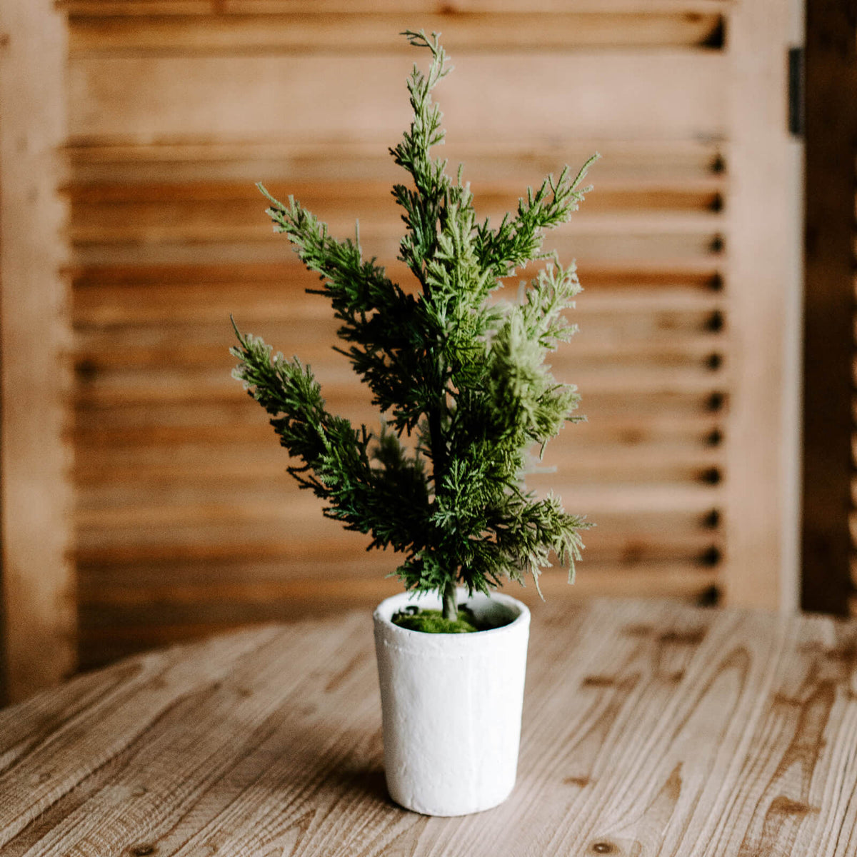 A realistic faux 20 inch tall pine tree inside a small, bright white pot for tabletop or shelf decorating during the holidays