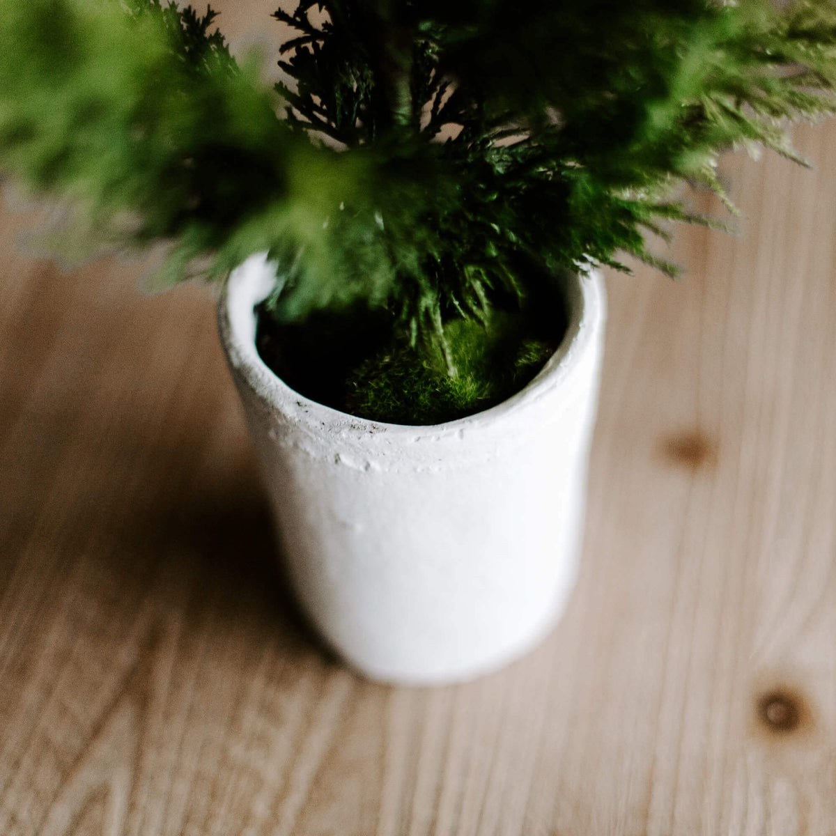 The details of a rustic white pot that holds a realistic faux 20 inch tall pine tree for tabletop or mantle decorating during the holidays