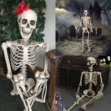 Halloween Prop Human Skeleton Full Size Skull Hand Life Body Anatomy Model Decor