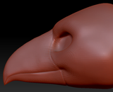 Gender Neutral Toucan Head Base