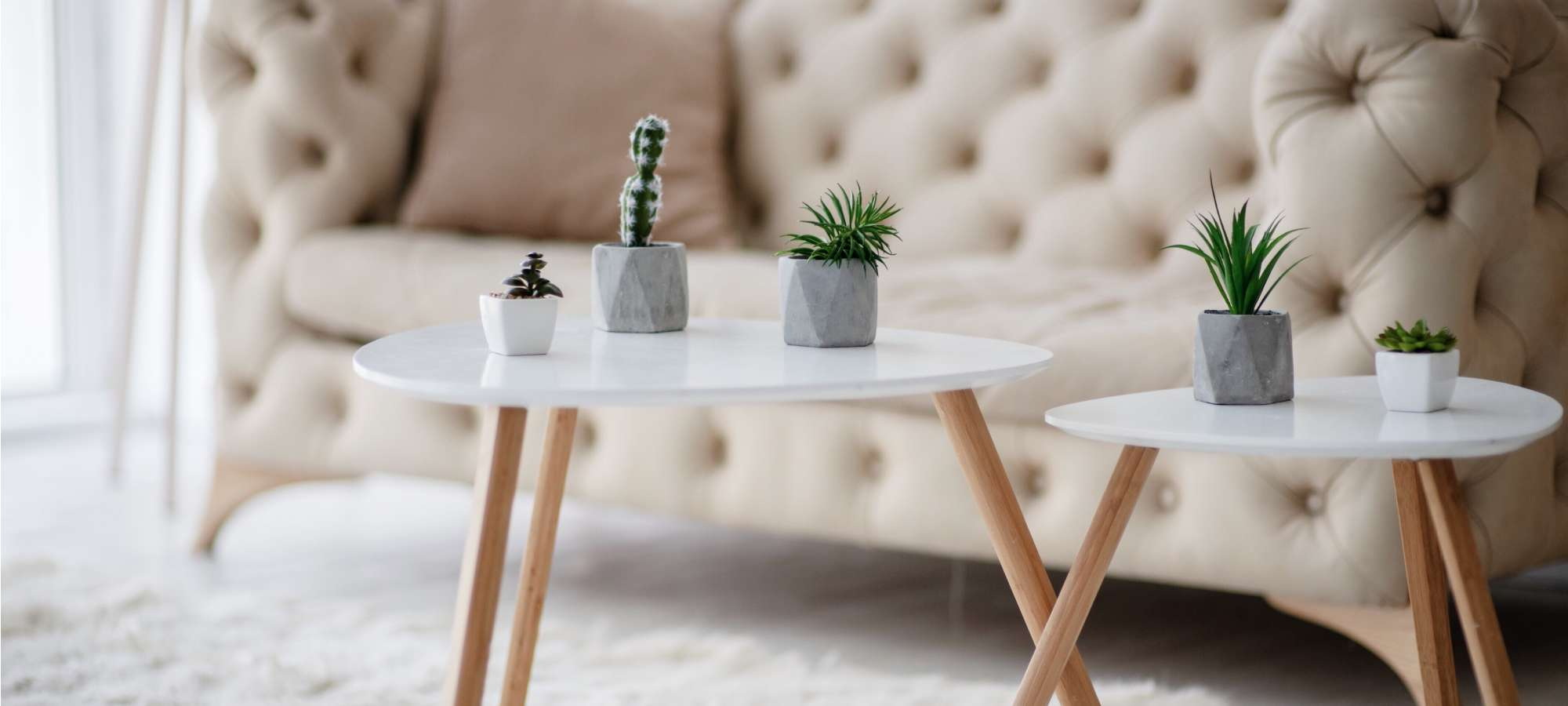 succulents on white table beige couch