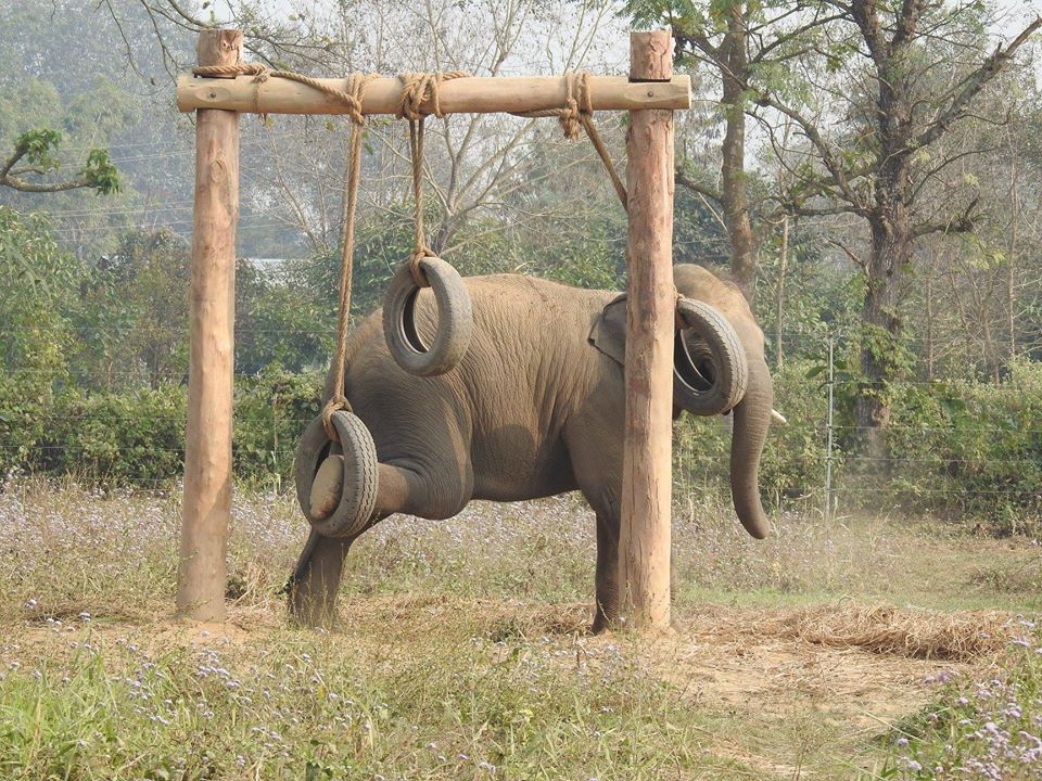 Elephant Wellness Program