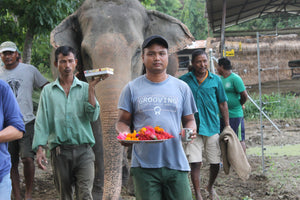 Mahout Care