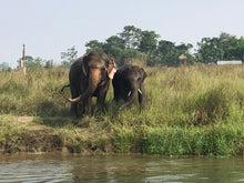 Load image into Gallery viewer, A Day with the Elephants