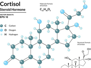Cortisol and Insulin - A closer look at hormonal obesity