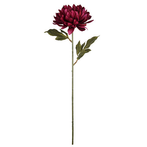 "27"" Longstem Dahlia Pick- Raspberry  SKU 30078970"