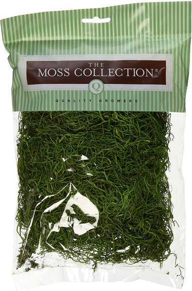 Preserved Spanish Moss (108.5 Cubic Inches)-Green Apple   SKU QG1542