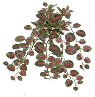 "15"" Pelargonium Bush-Green/Burgundy   SKU FL3714-GBU"