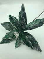 "22"" Sugar Poinsettia Stem- Green SKU 104040"