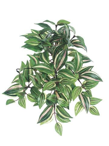 "12"" Hanging Wandering Jew-Green/Cream SKU PBW306-GR/CR"