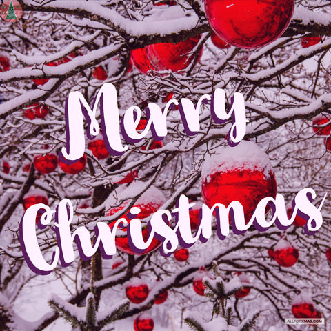 Snowy Merry Christmas Card | Greeting Cards | All For Xmas