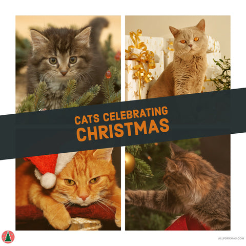 Cats Celebrating Christmas Card | Greeting Cards | All For Xmas - All For Xmas