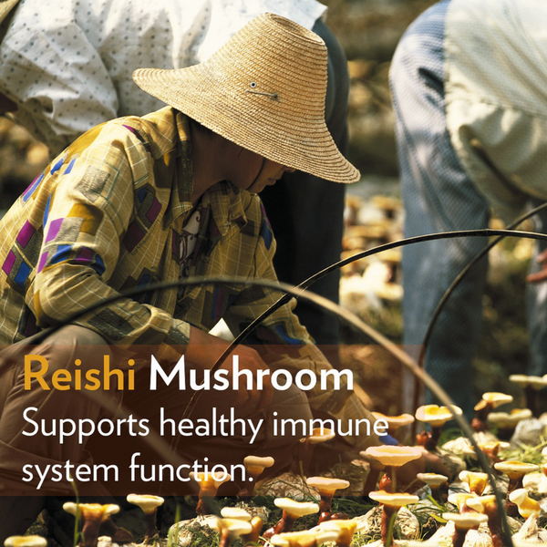 REISHI IMMUNE SUPPORT