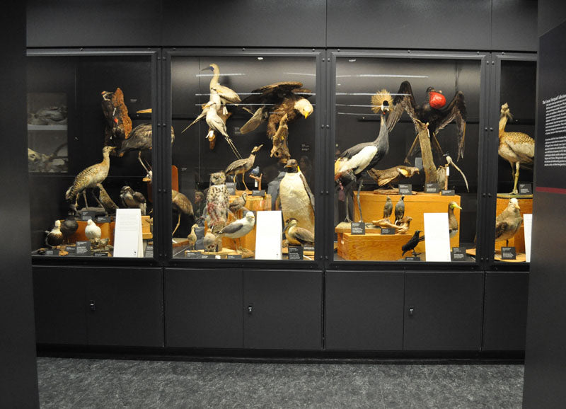 beatty biodiversity museum