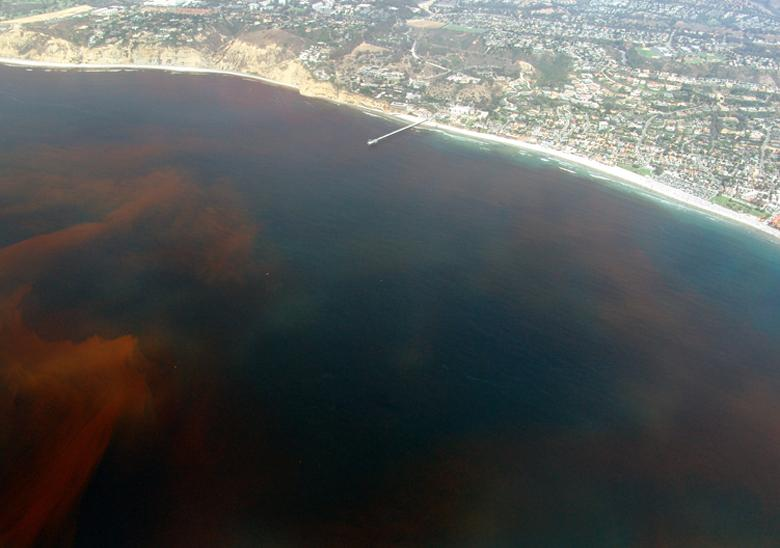 more on red tide