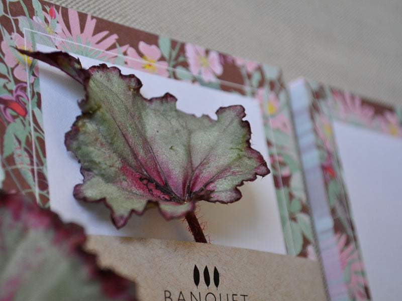 notepads and rex begonia