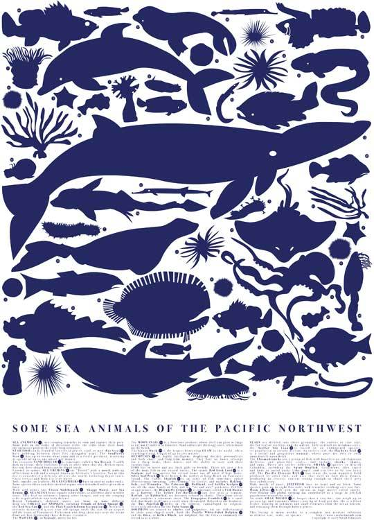 some sea animals of the pacific northwest