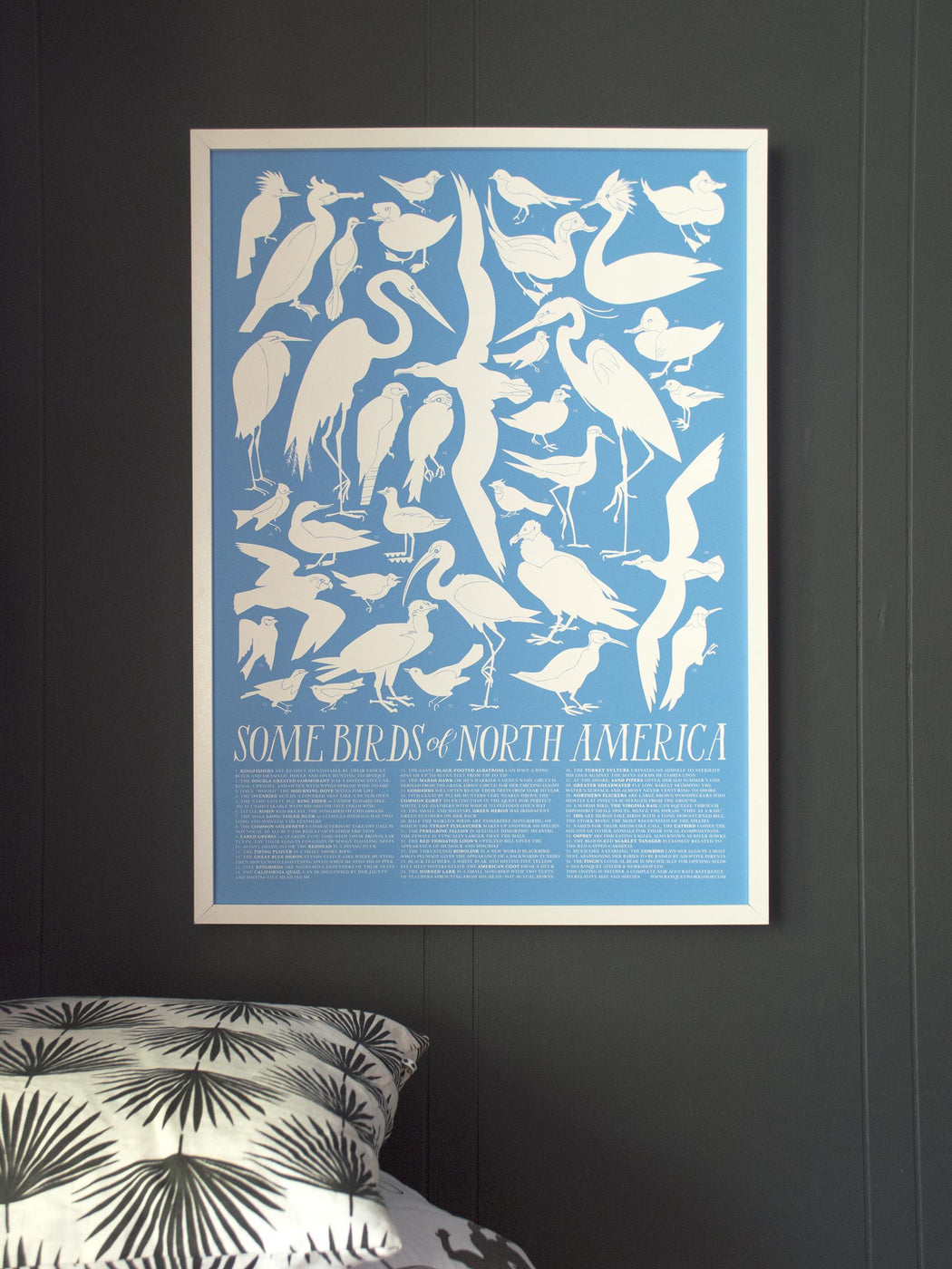 Birds of North America - Art Print - sky blue