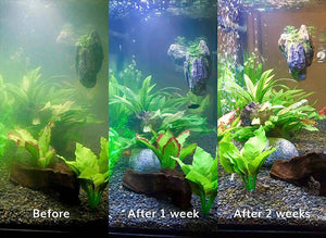 Splosht Aquarium Pack Before After