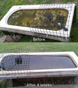 Splosht Water Trough Pack Before After