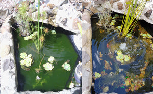 Small Fishpond/Water Feature Pack