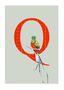 Q - Quetzal Alphabet Animal Art Print